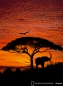 Preview: Fototapete National Geographic AFRICAN SUNSET 194x 270 Elefant Baum Adler rot-orange Sonnenuntergang