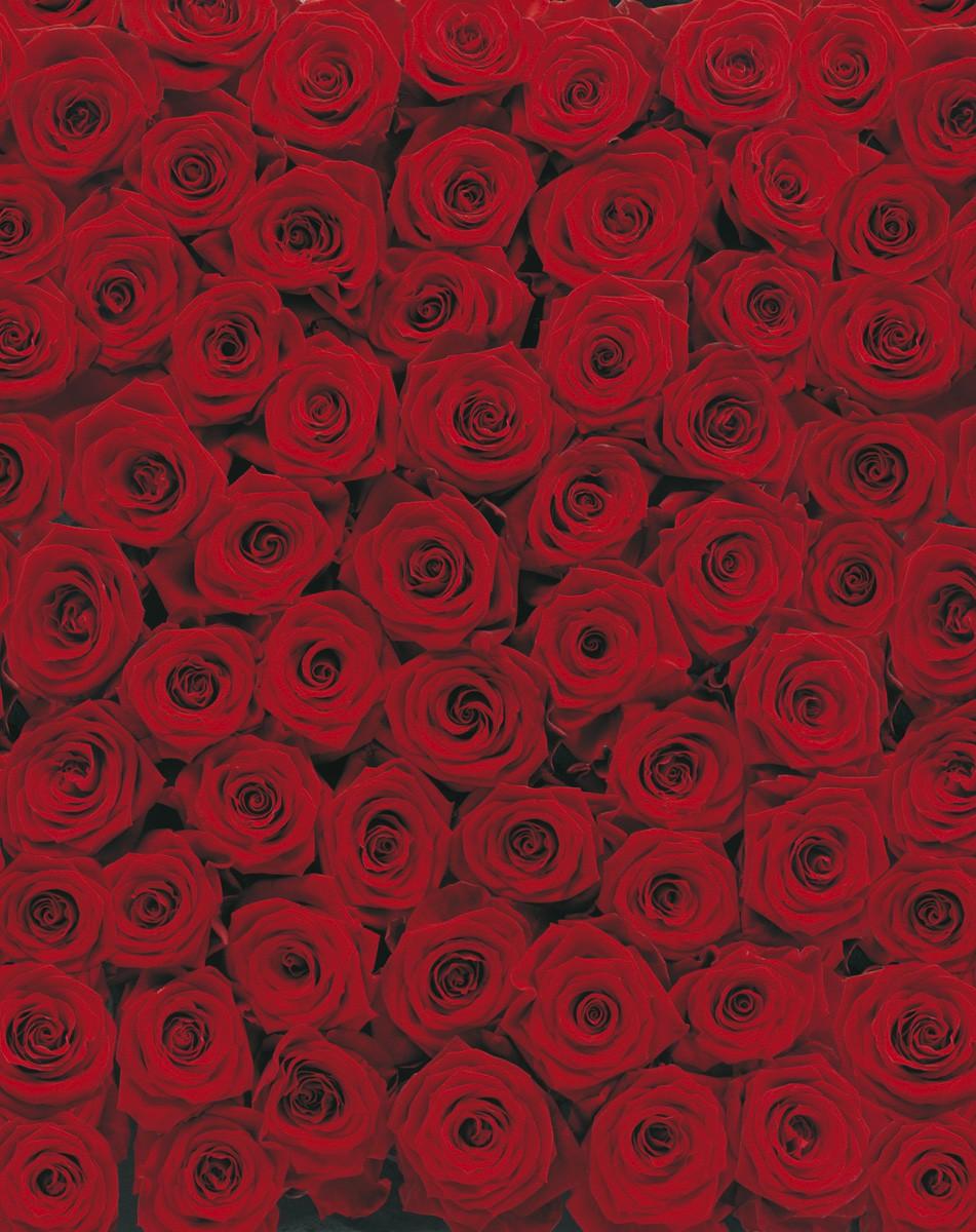картинки где много розы надо искать клиента