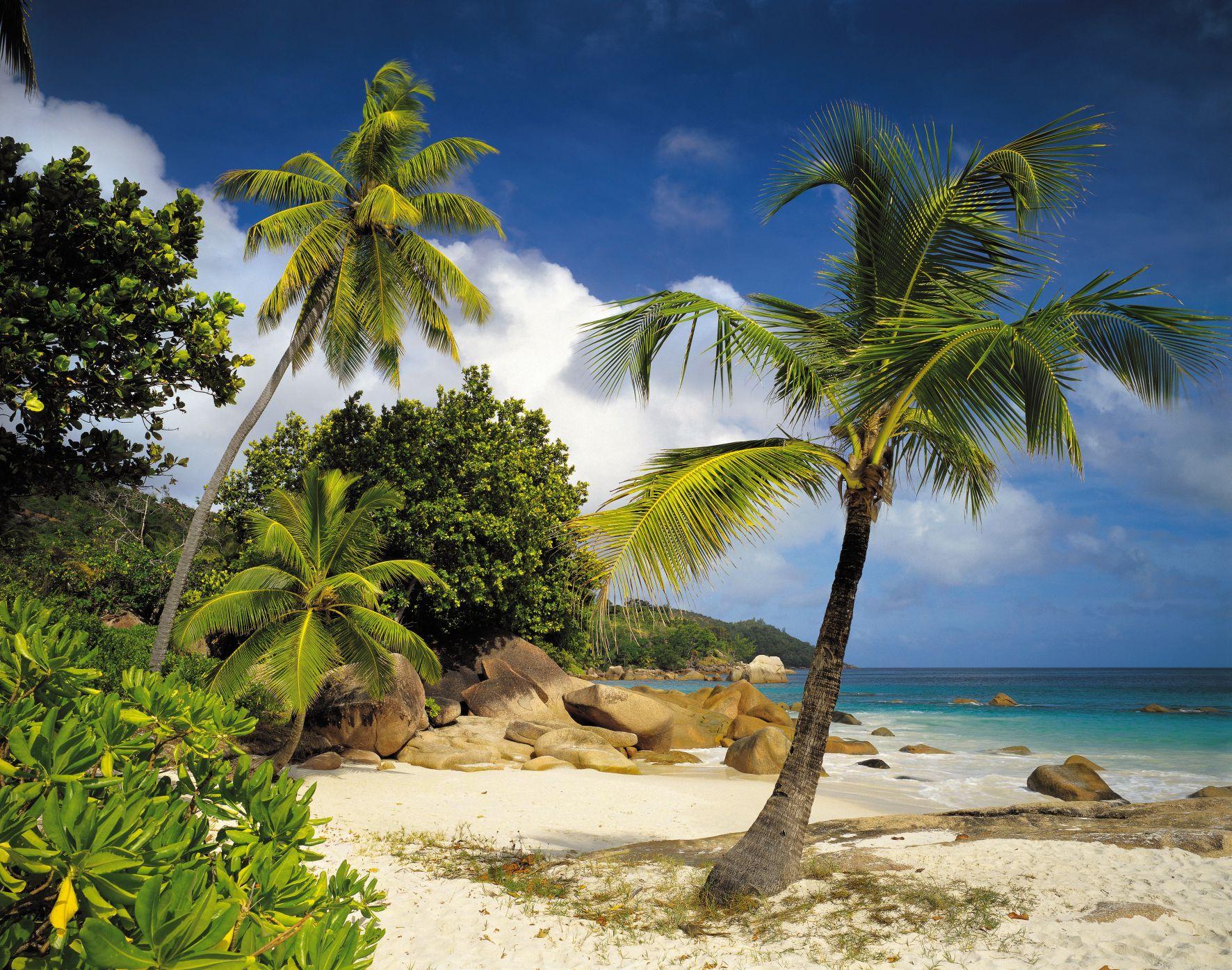 kiss fototapeten zu besten preisen fototapete praslin 368x254 palmenstrand seychellen. Black Bedroom Furniture Sets. Home Design Ideas