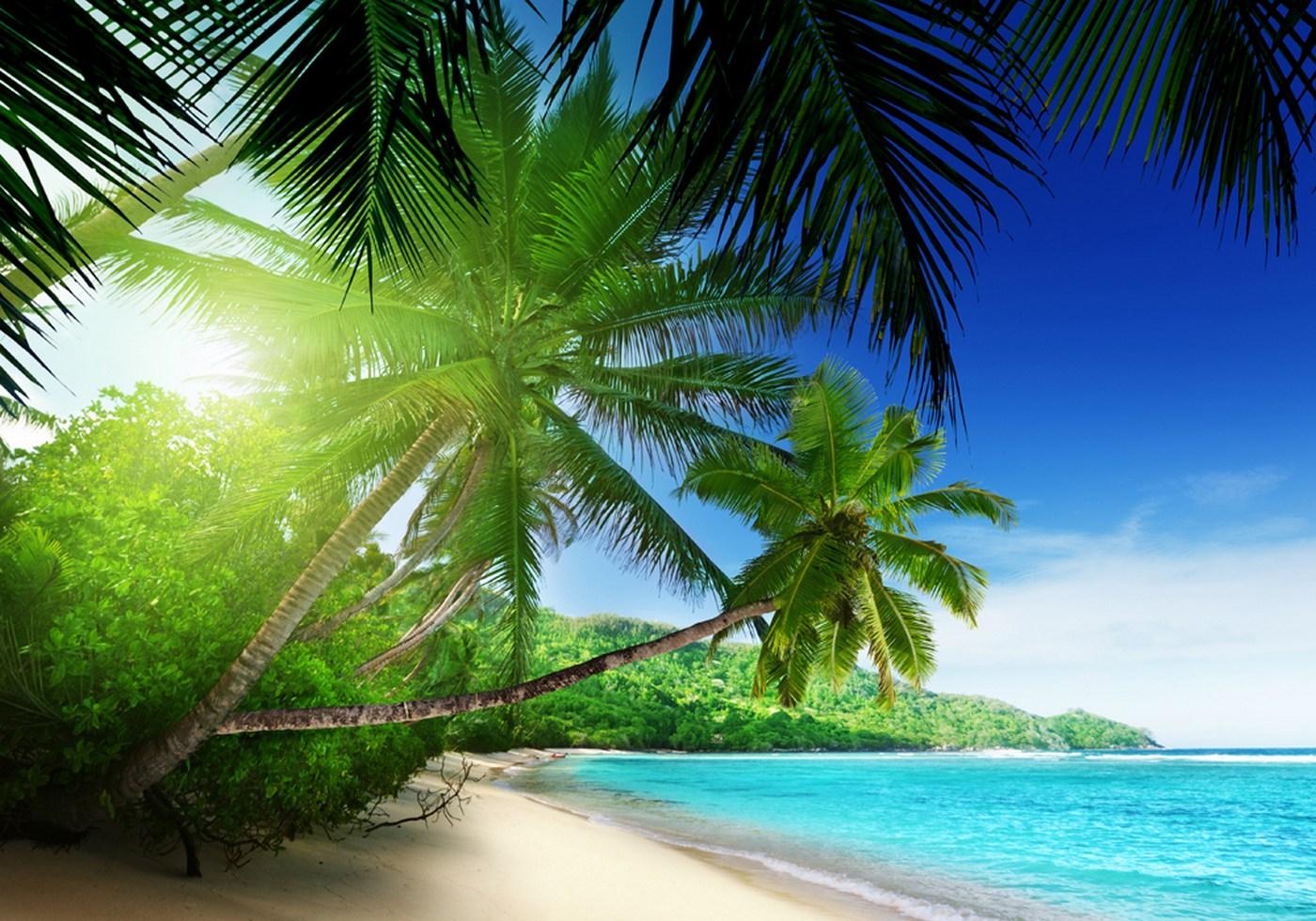 Vlies Fototapete 5   Paradise Beach Strand Tapete Strand Meer Palmen Beach  3D Ozean Palme Blau