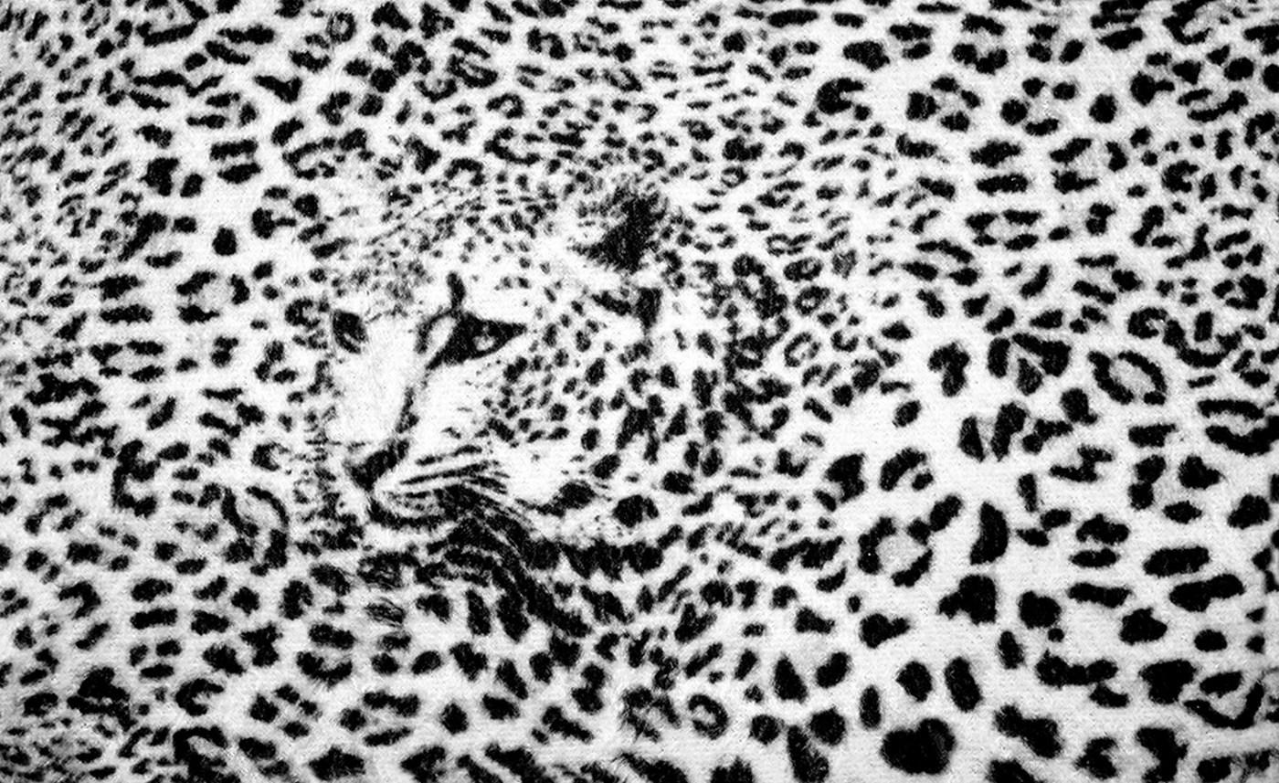 vlies fototapete 2264 tiere tapete leopard muster natur kopf schwarz wei - Tapete Schwarz Weis Muster