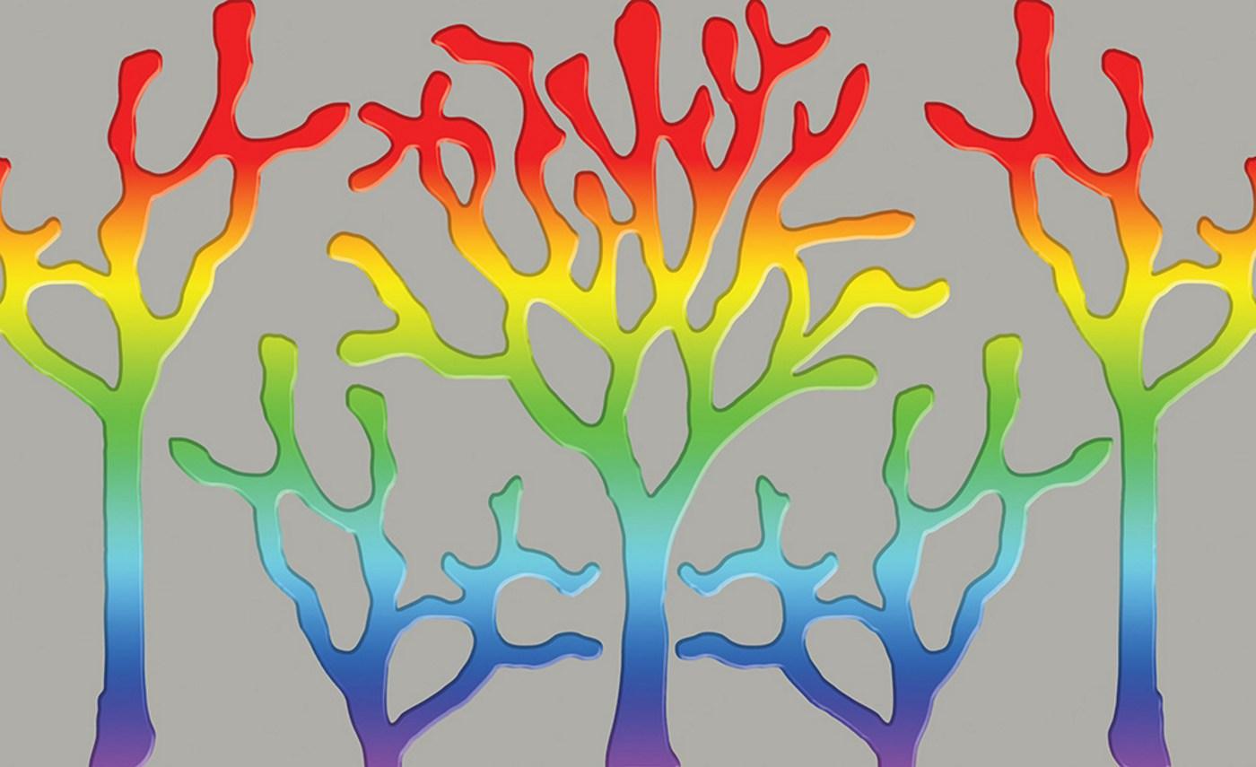 Vlies Fototapete 2447   Kunst Tapete Malerei Baum Korallen Geflecht Farbe  Grau