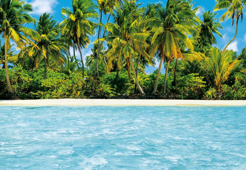 kiss fototapeten zu besten preisen fototapete maledive dream 366x254 malediven insel palme. Black Bedroom Furniture Sets. Home Design Ideas
