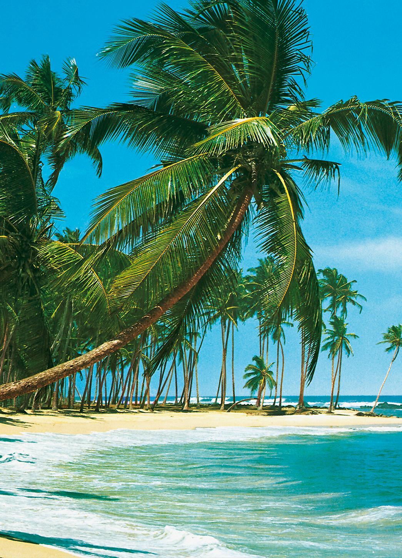 kiss fototapeten zu besten preisen fototapete south sea 183x254 s dsee strand palmen blau. Black Bedroom Furniture Sets. Home Design Ideas